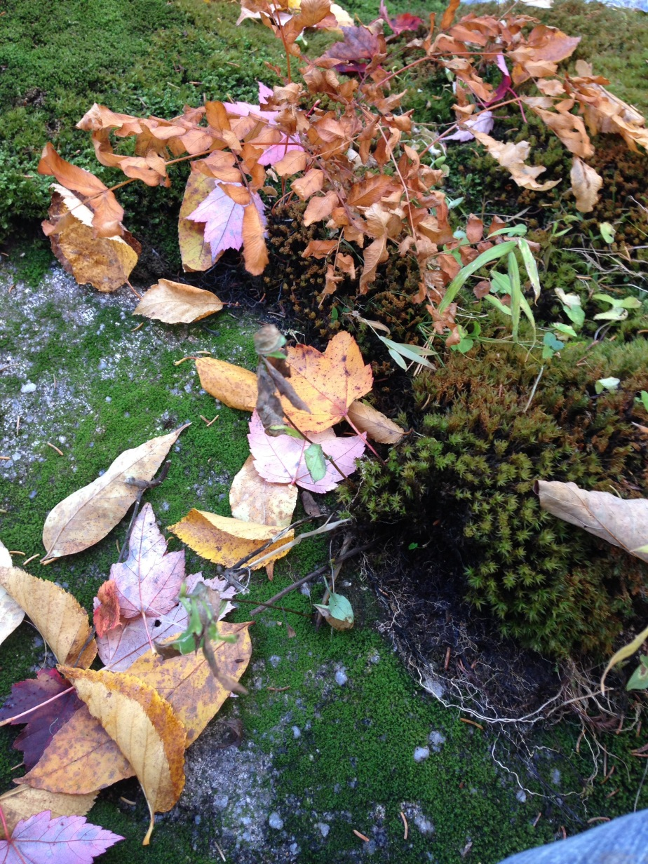 Fallen leaves poetry